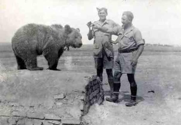 355741-wojtek-the-bear