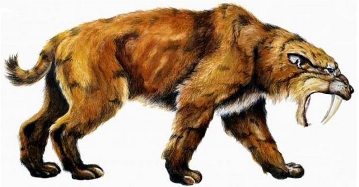 smilodon saber-toothed tiger